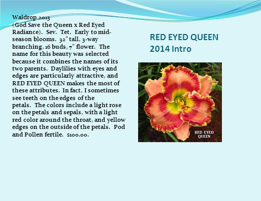 RED EYED QUEEN 2014 Intro Waldrop 2013 (God Save the Queen x Red Eyed Radiance).