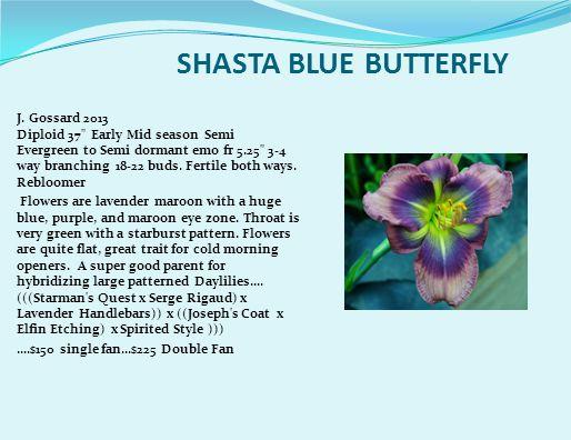 SHASTA BLUE BUTTERFLY J.