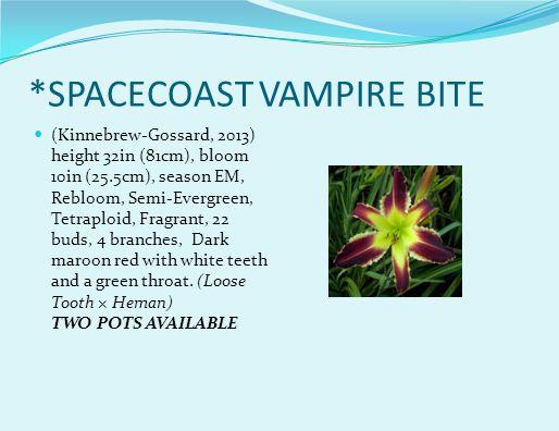 *SPACECOAST VAMPIRE BITE (Kinnebrew-Gossard, 2013) height 32in (81cm), bloom 10in (25.5cm), season EM, Rebloom, Semi-Evergreen, Tetraploid, Fragrant, 22 buds, 4 branches, Dark maroon red with white teeth and a green throat.