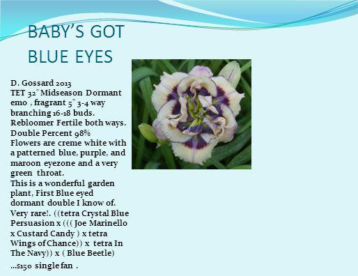MORTICIA'S MASCARA (Waldrop, 2008) height 29in (74cm), bloom 4in (10.2cm), season EM, Rebloom, Dormant, Tetraploid, 19 buds, 3 branches, Purple with darker eye above green throat.
