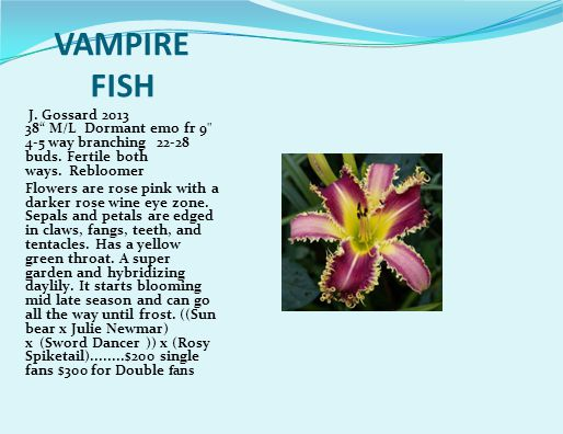 VAMPIRE FISH J. Gossard 2013 38 M/L Dormant emo fr 9 4-5 way branching 22-28 buds.