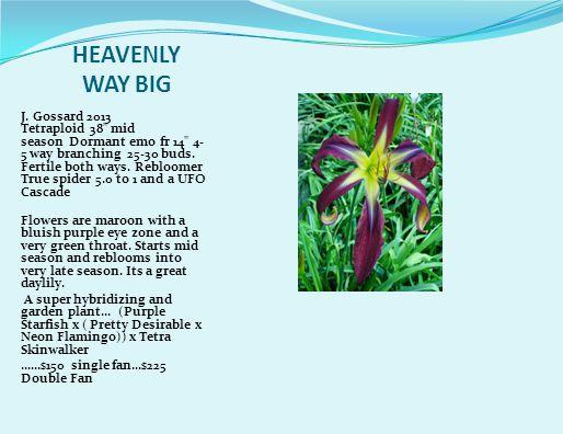 HEAVENLY WAY BIG J.