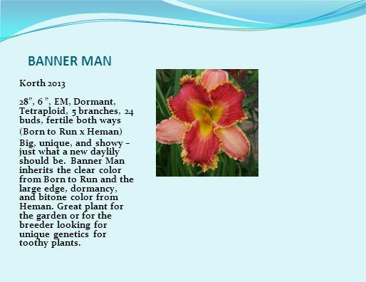 WIND CHARMER J.Gossard 2013 Diploid 54 Mid season Dormant emo fr 10 4 way branching 28-32 buds.