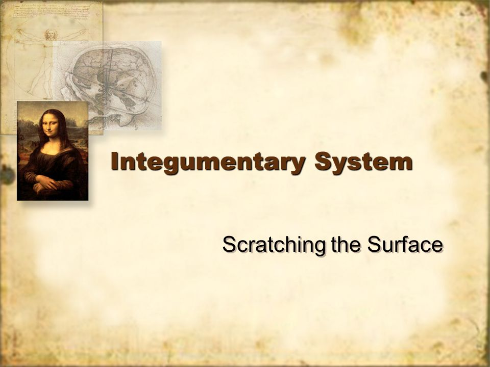 Integumentary System Scratching the Surface