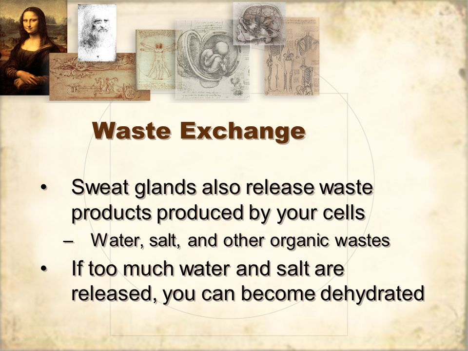 Waste Exchange Sweat glands also release waste products produced by your cells –Water, salt, and other organic wastes If too much water and salt are released, you can become dehydrated Sweat glands also release waste products produced by your cells –Water, salt, and other organic wastes If too much water and salt are released, you can become dehydrated
