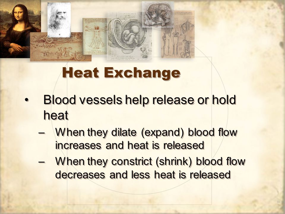 Heat Exchange Blood vessels help release or hold heat –When they dilate (expand) blood flow increases and heat is released –When they constrict (shrink) blood flow decreases and less heat is released Blood vessels help release or hold heat –When they dilate (expand) blood flow increases and heat is released –When they constrict (shrink) blood flow decreases and less heat is released