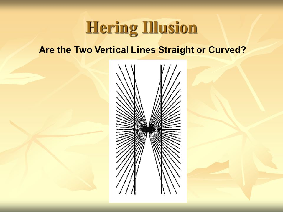 Café Wall Illusion (a)Are the Gray Lines Below All Parallel.