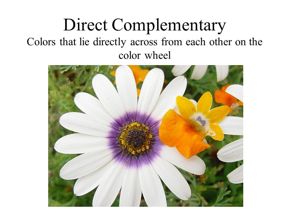 Direct Complementary Colors that lie directly across from each other on the color wheel