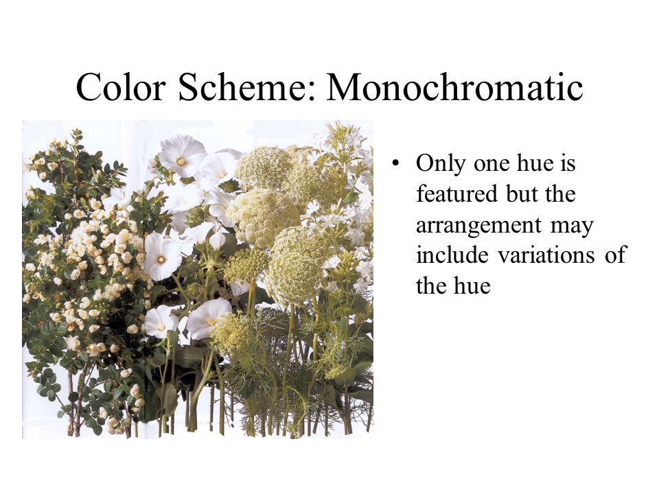 Color Scheme: Monochromatic Only one hue is featured but the arrangement may include variations of the hue