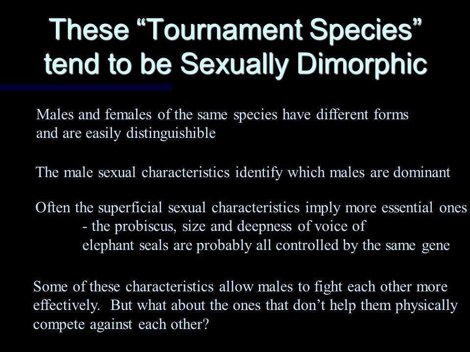Behavior #2: Males compete so that females choose them (Elephant Seals, Elk, Lions, Gorillas, Widowbird)