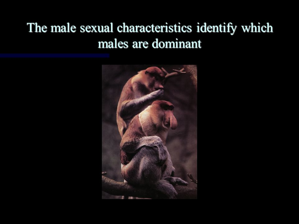 Males and females of the same species have different forms and are easily distinguishable Males and females of the same species have different forms and are easily distinguishable