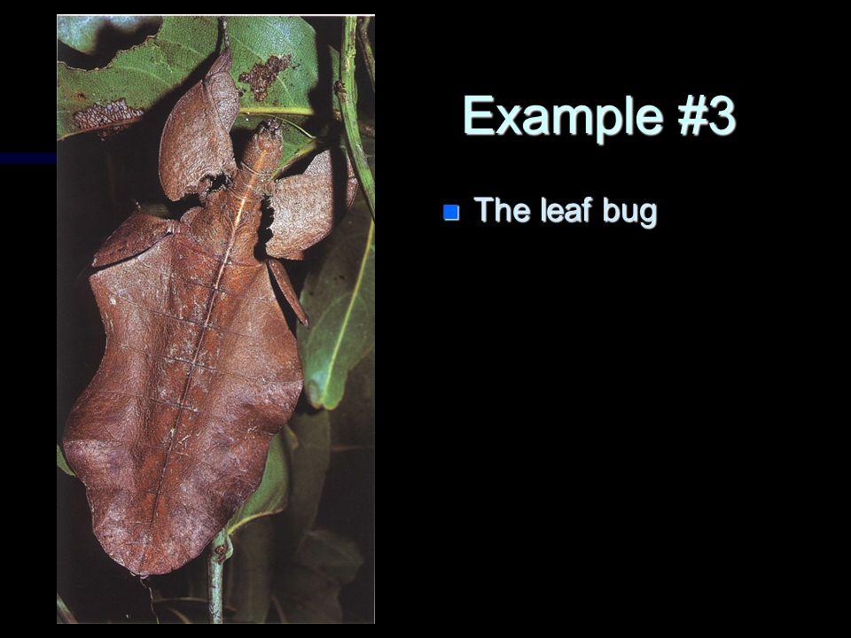 Example #3 n The leaf bug