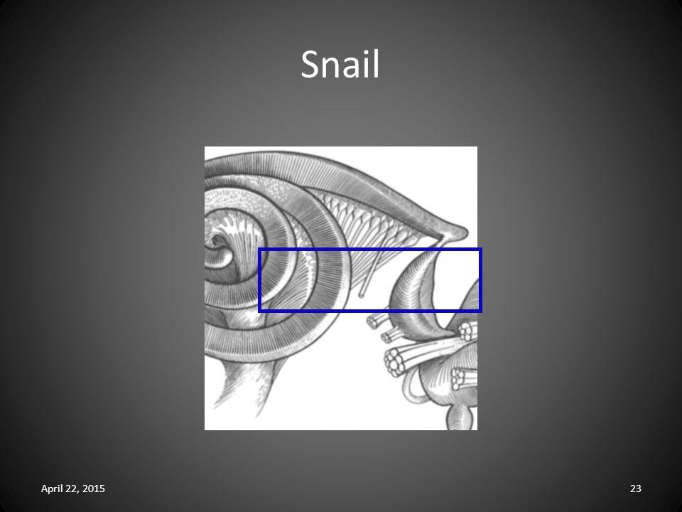 Snail April 22, 201523