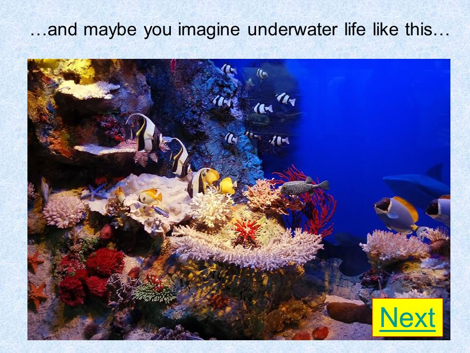 …and maybe you imagine underwater life like this… Next