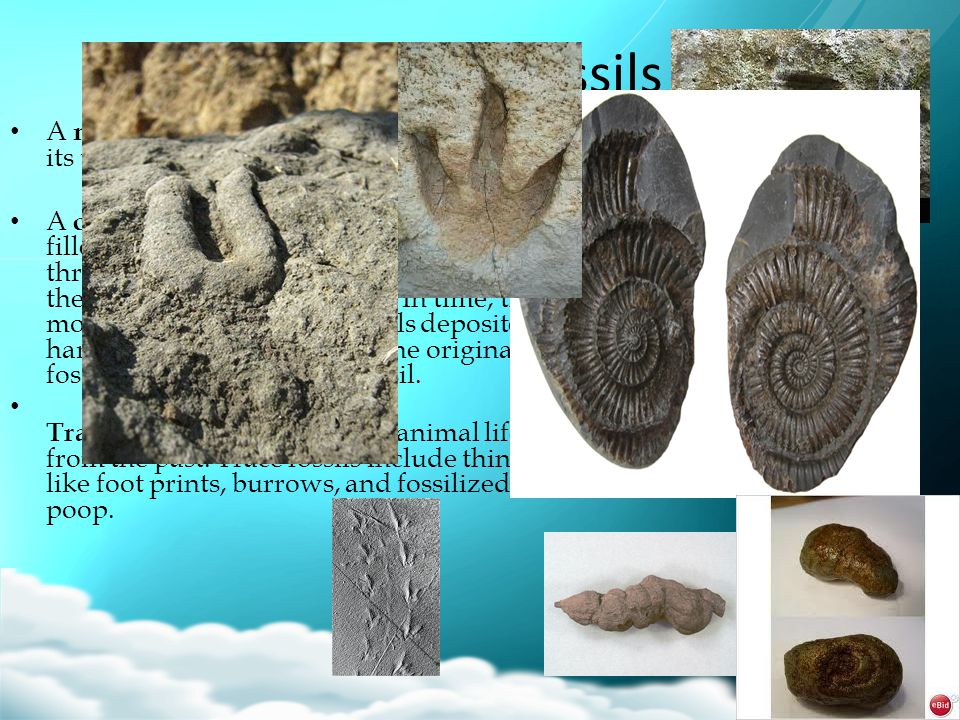 Types of Fossils A mold is an imprint of an organism or its trace. A cast fossil forms when a mold fossil is filled with some form of mineral, usually