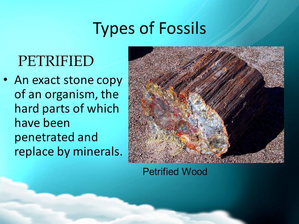Types of Fossils PETRIFIED An exact stone copy of an organism, the hard parts of which have been penetrated and replace by minerals. Petrified Wood