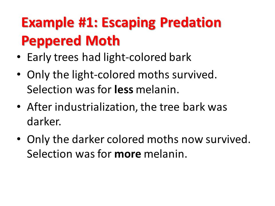 Example #1: Escaping Predation Peppered Moth Early trees had light-colored bark Only the light-colored moths survived. Selection was for less melanin.