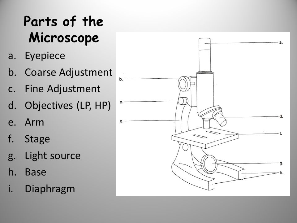 Parts of the Microscope a.Eyepiece b.Coarse Adjustment c.Fine Adjustment d.Objectives (LP, HP) e.Arm f.Stage g.Light source h.Base i.Diaphragm