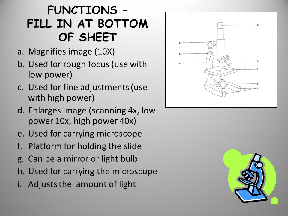 FUNCTIONS – FILL IN AT BOTTOM OF SHEET a.Magnifies image (10X) b.Used for rough focus (use with low power) c.Used for fine adjustments (use with high power) d.Enlarges image (scanning 4x, low power 10x, high power 40x) e.Used for carrying microscope f.Platform for holding the slide g.Can be a mirror or light bulb h.Used for carrying the microscope i.Adjusts the amount of light