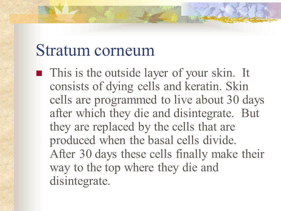 Stratum corneum This is the outside layer of your skin.