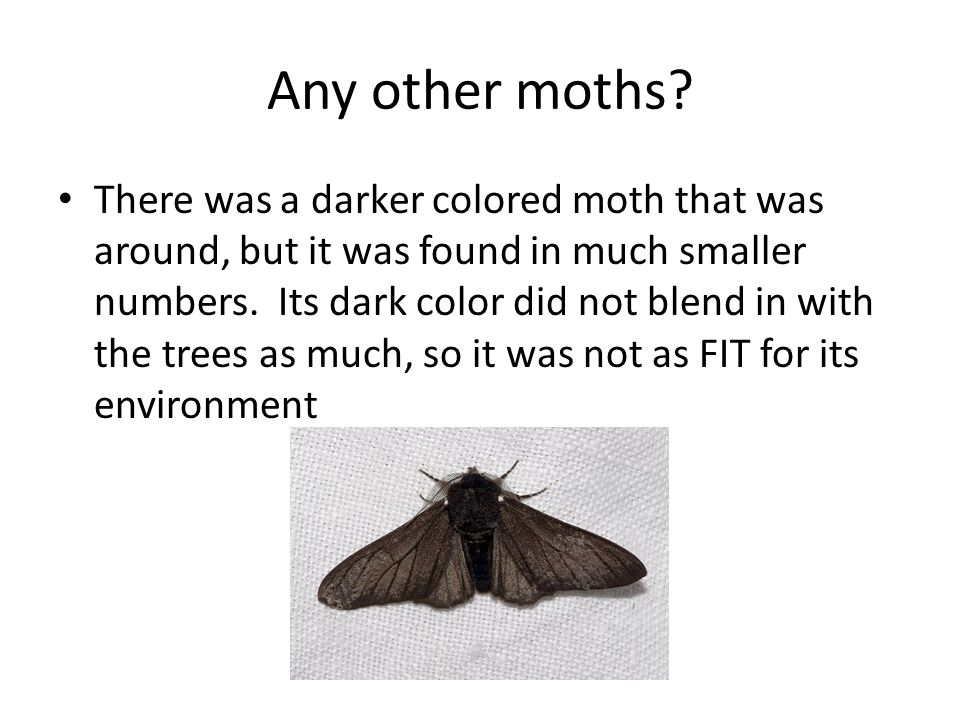 Any other moths.