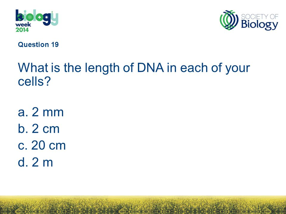 Question 19 What is the length of DNA in each of your cells a. 2 mm b. 2 cm c. 20 cm d. 2 m