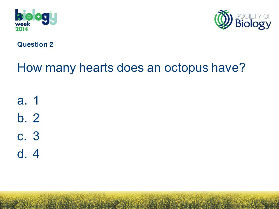 Question 2 How many hearts does an octopus have? a.1 b.2 c.3 d.4