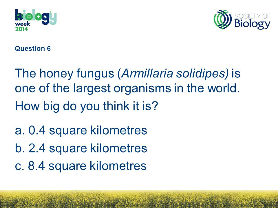 Question 6 The honey fungus (Armillaria solidipes) is one of the largest organisms in the world.