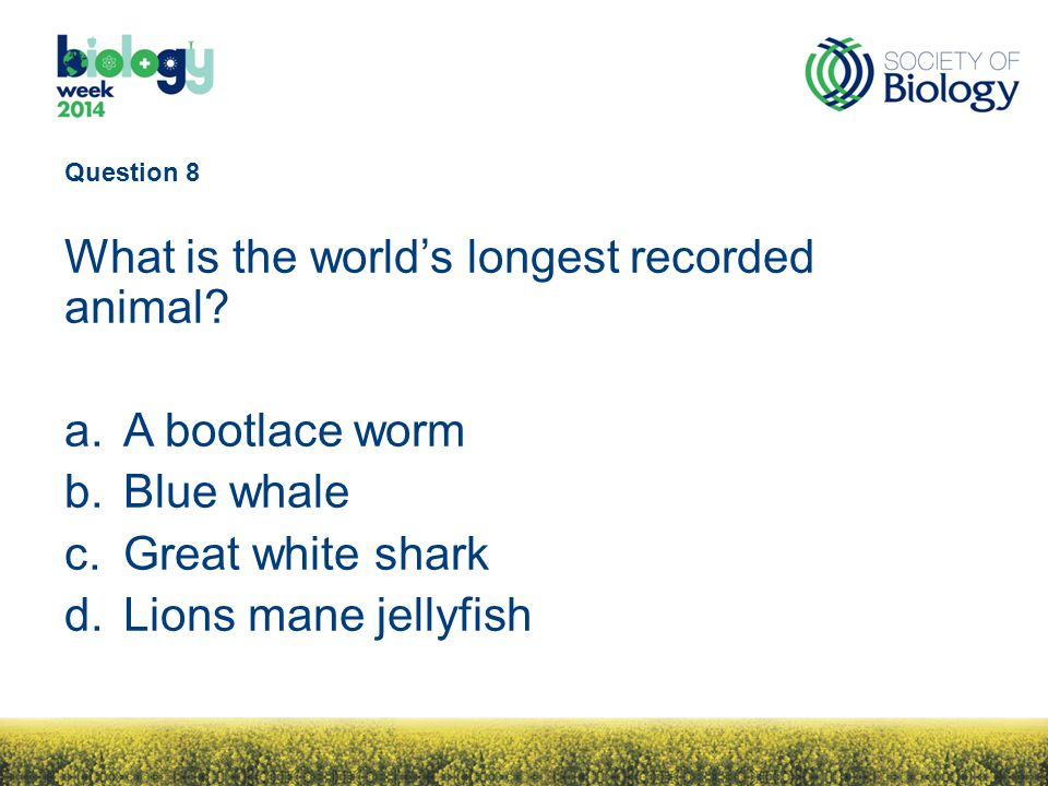 Question 8 What is the world's longest recorded animal.