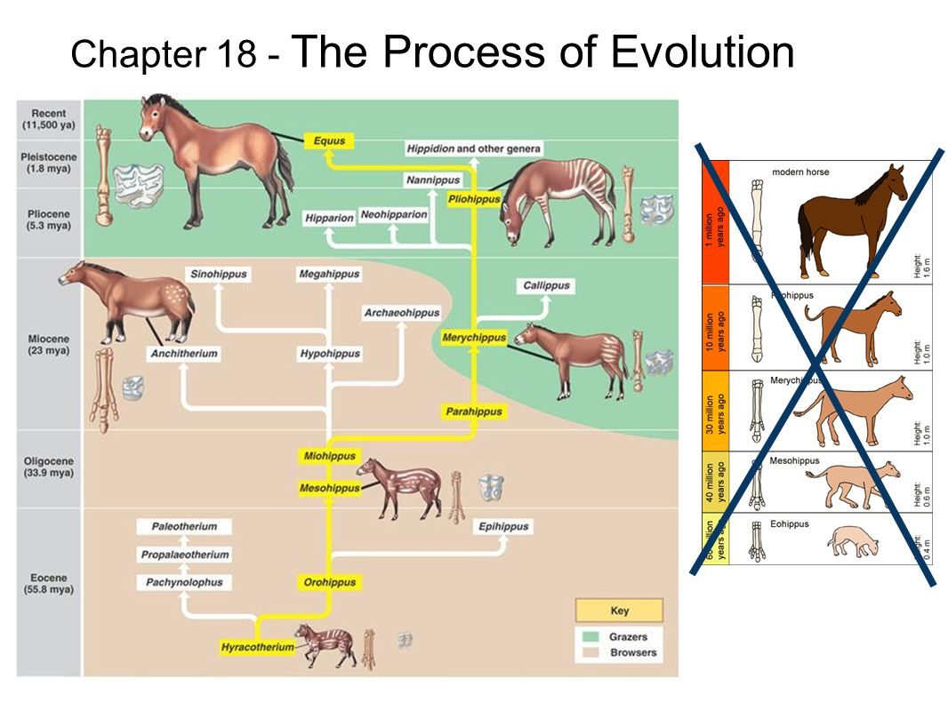 Chapter 18 - The Process of Evolution