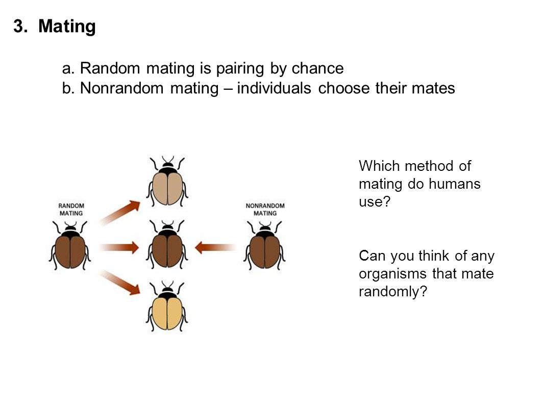 3. Mating a. Random mating is pairing by chance b. Nonrandom mating – individuals choose their mates Which method of mating do humans use? Can you thi