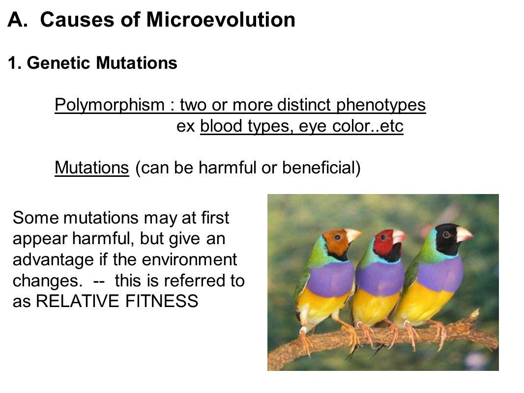 INTERESTING MUTATIONS