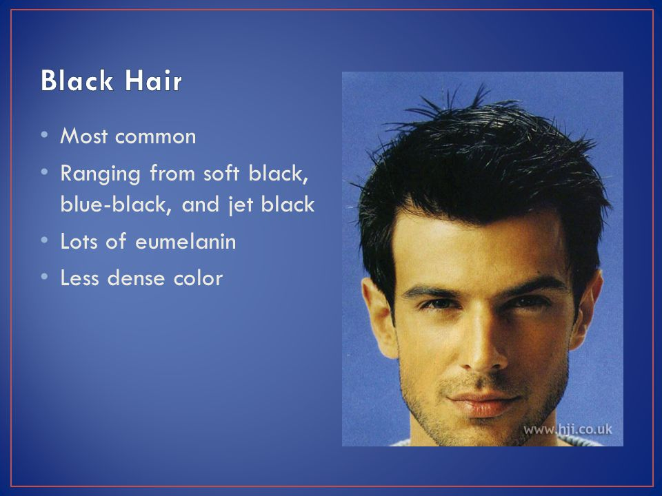 Most common Ranging from soft black, blue-black, and jet black Lots of eumelanin Less dense color