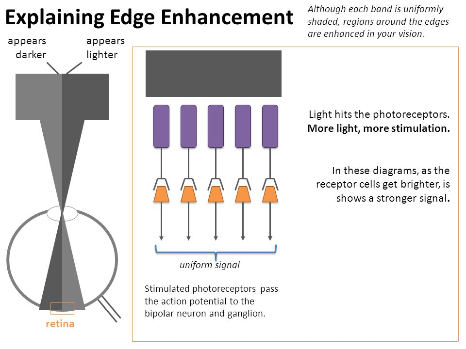 Explaining Edge Enhancement Although each band is uniformly shaded, regions around the edges are enhanced in your vision.