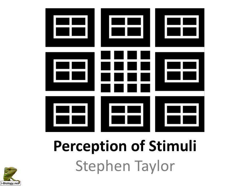 Perception of Stimuli Stephen Taylor