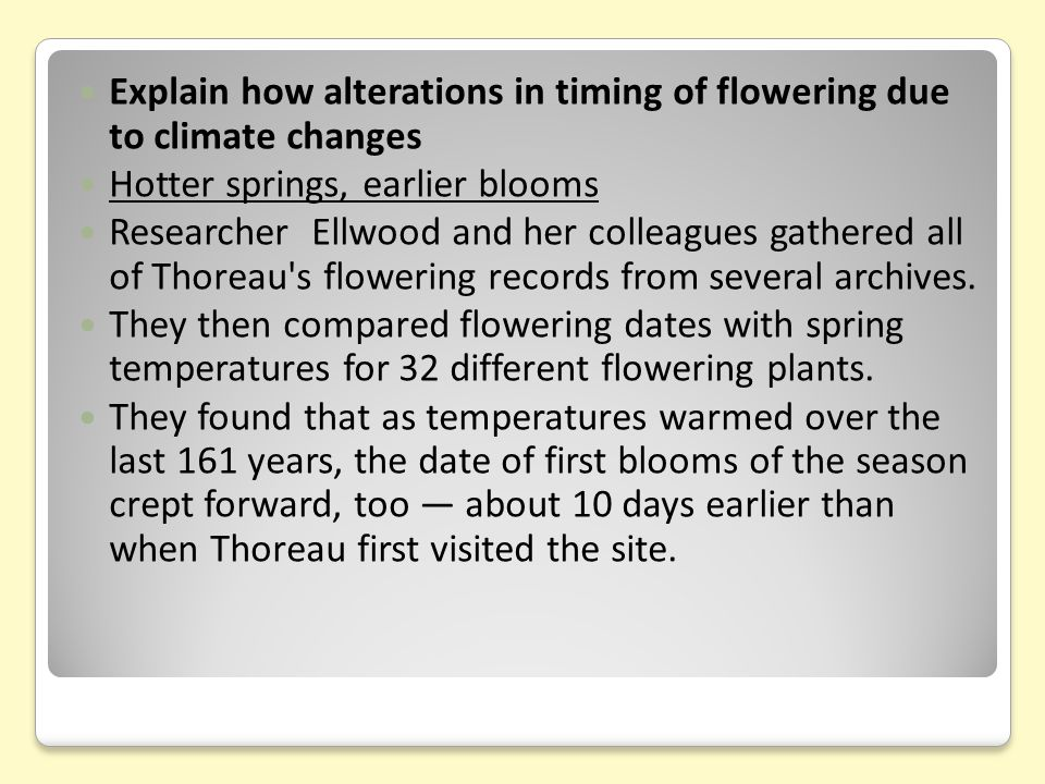 During the record-breaking years of 2010 and 2012, flowering happened a full 20 to 21 days earlier.
