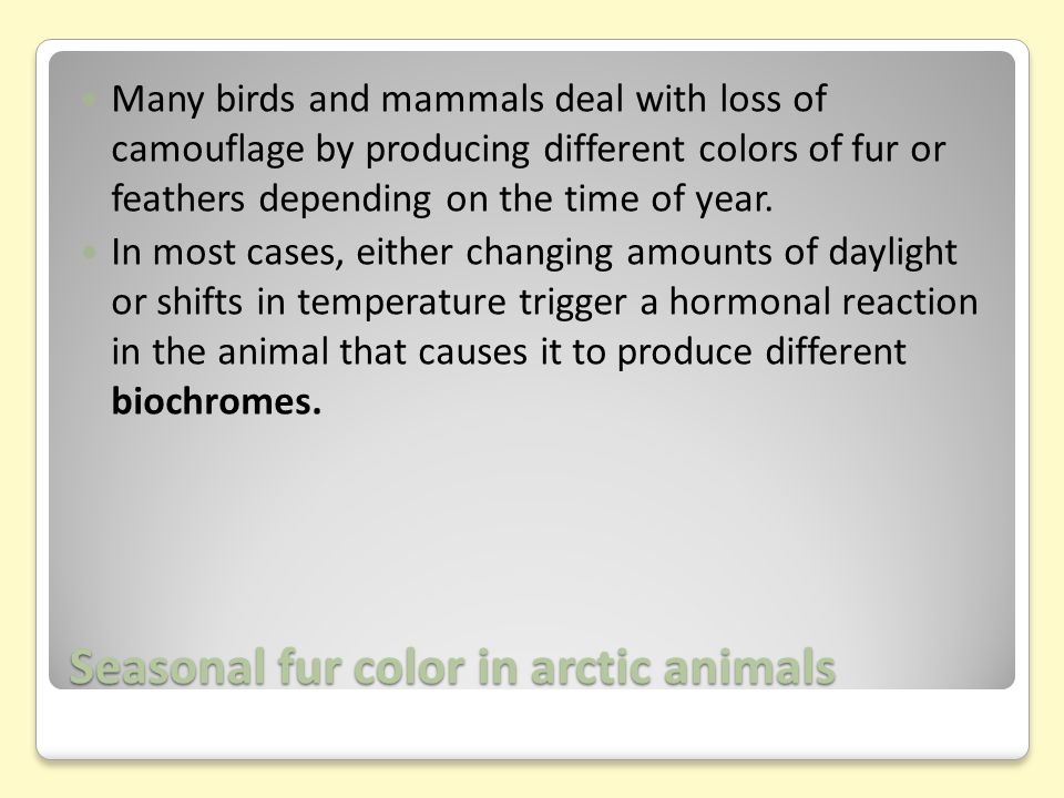 Seasonal fur color in arctic animals Many birds and mammals deal with loss of camouflage by producing different colors of fur or feathers depending on