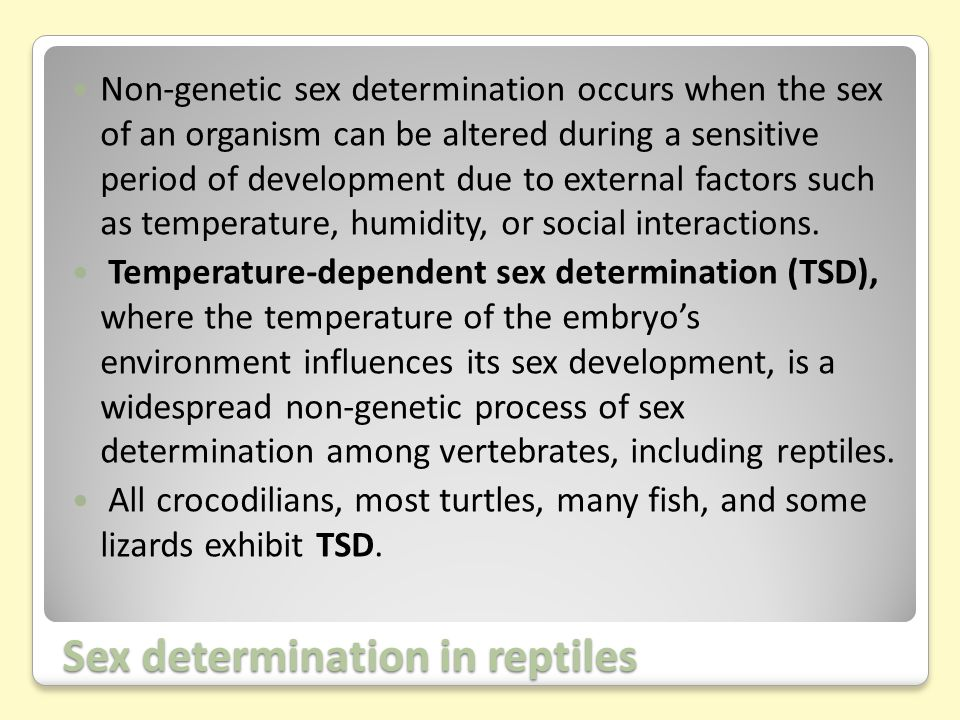 Sex determination in reptiles Non-genetic sex determination occurs when the sex of an organism can be altered during a sensitive period of development due to external factors such as temperature, humidity, or social interactions.