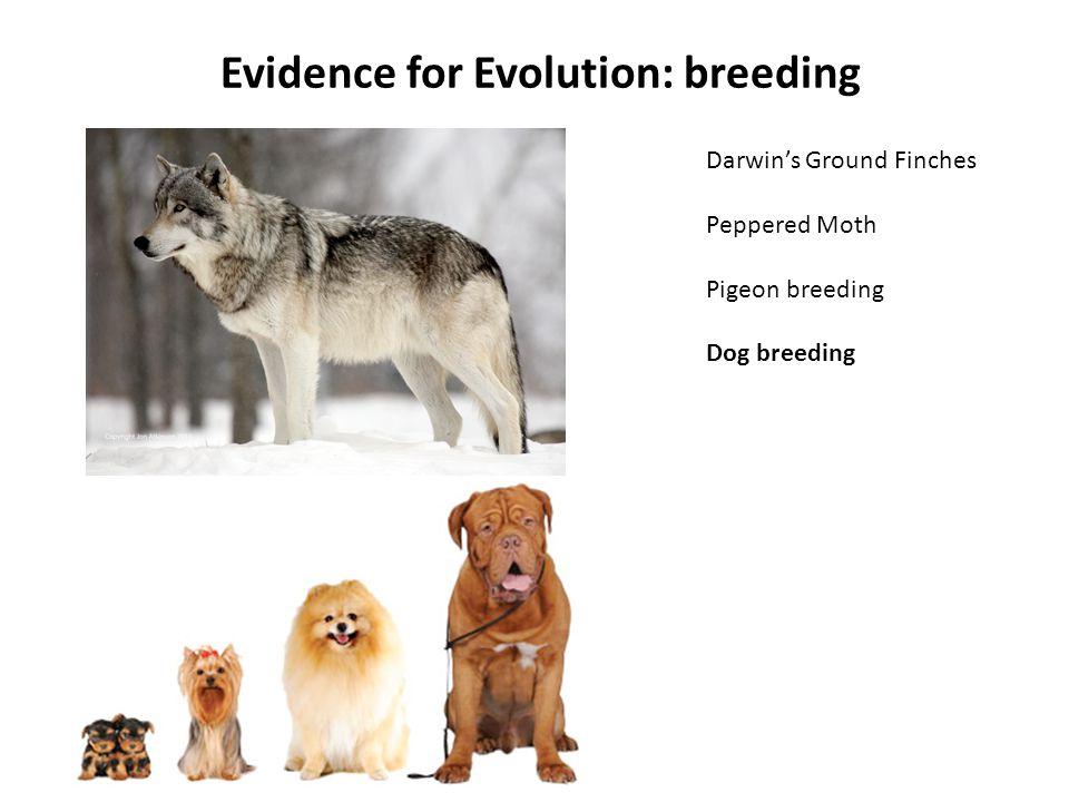 Evidence for Evolution: breeding Darwin's Ground Finches Peppered Moth Pigeon breeding Dog breeding
