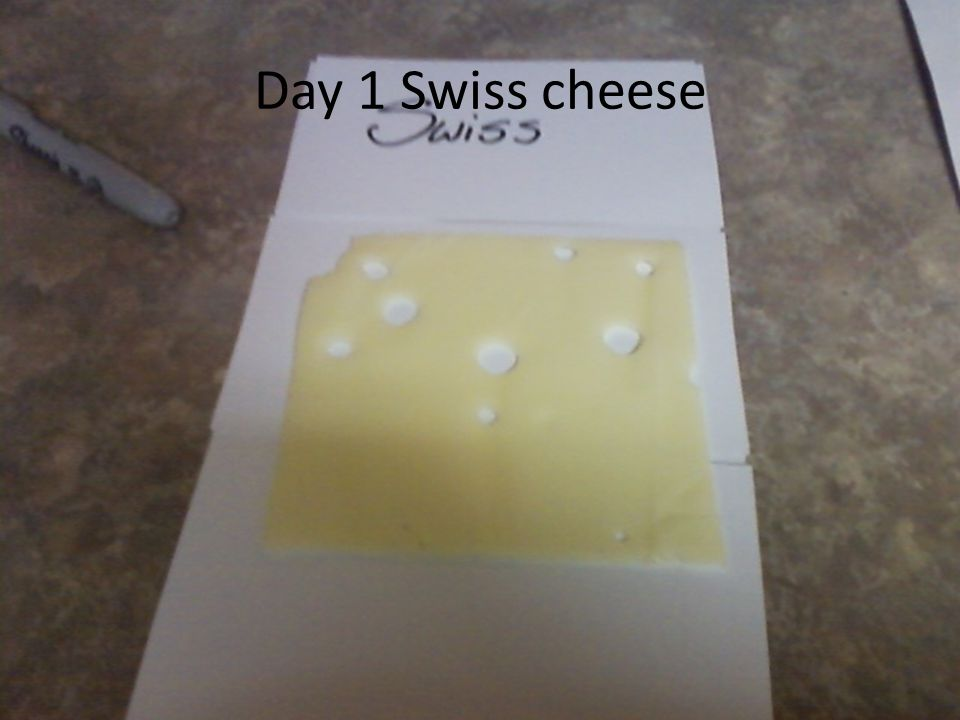 Day 1 Swiss cheese
