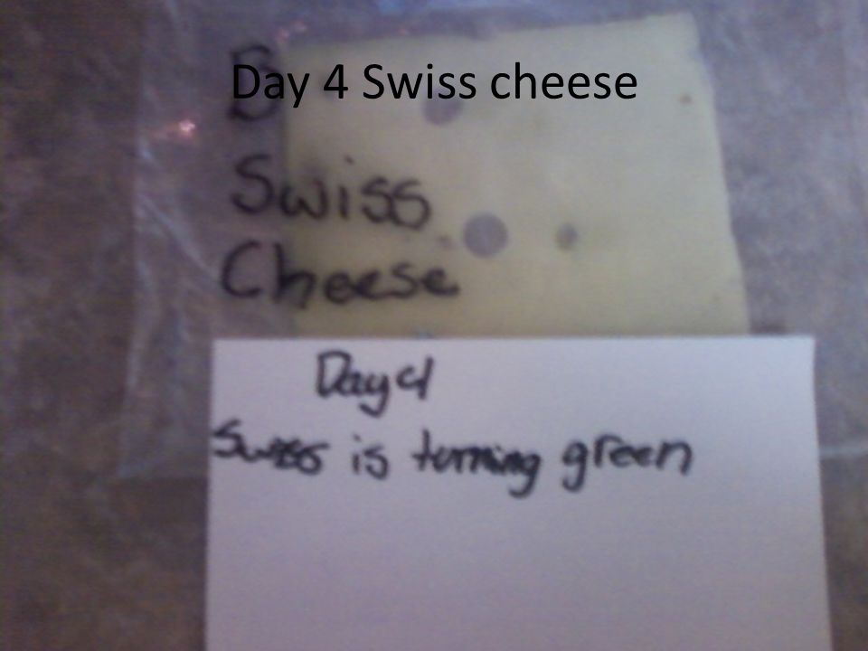 Day 4 Swiss cheese