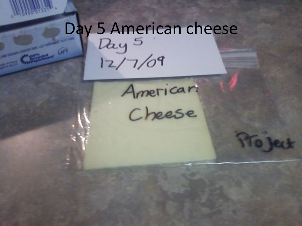 Day 5 American cheese