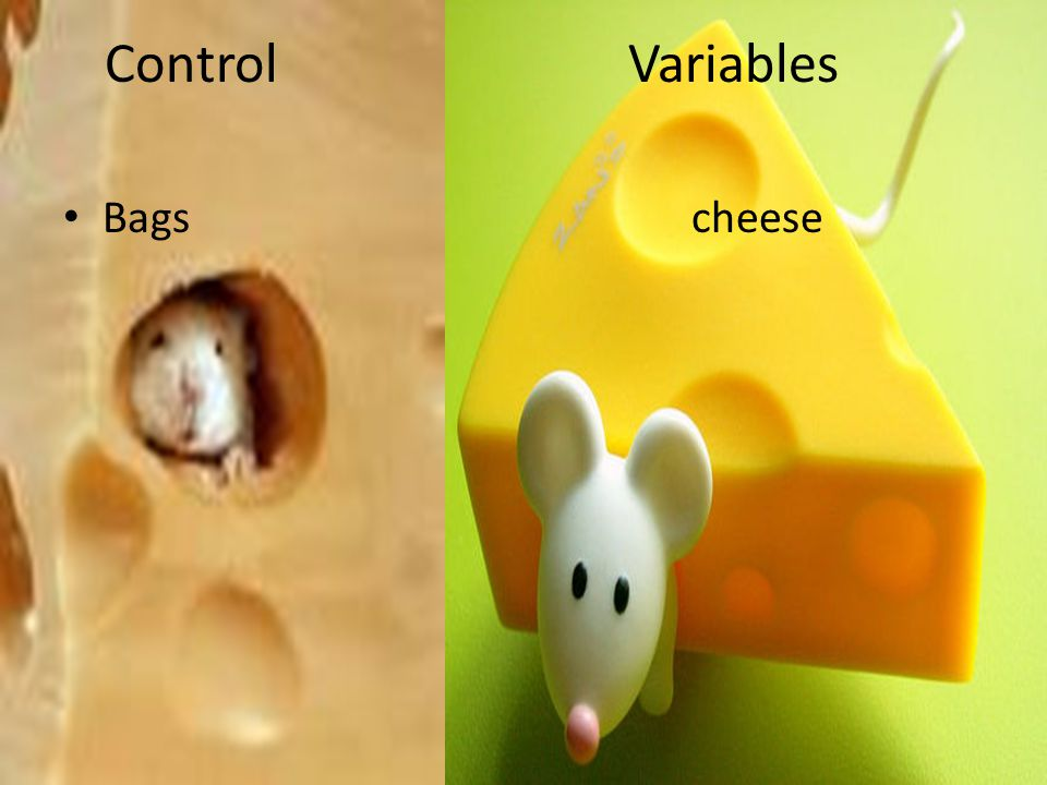 Control Variables Bags cheese