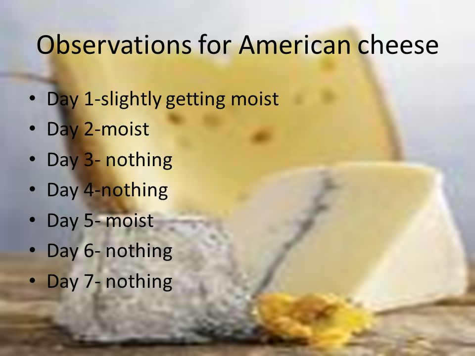 Observations for American cheese Day 1-slightly getting moist Day 2-moist Day 3- nothing Day 4-nothing Day 5- moist Day 6- nothing Day 7- nothing