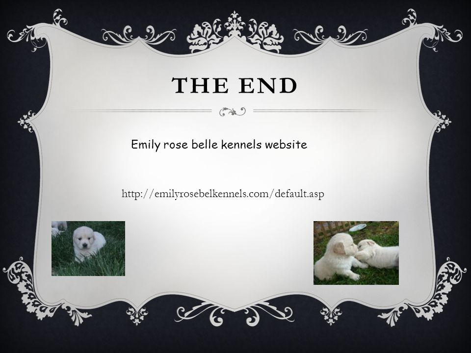 THE END Emily rose belle kennels website http://emilyrosebelkennels.com/default.asp