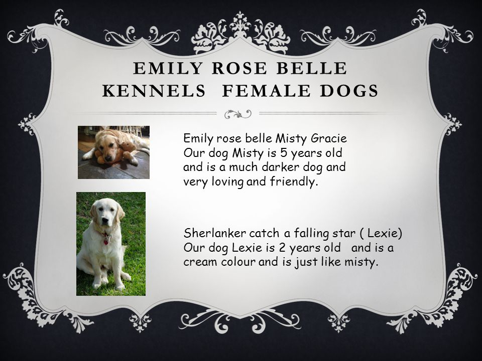 EMILY ROSE BELLE KENNELS FEMALE DOGS Emily rose belle Misty Gracie Our dog Misty is 5 years old and is a much darker dog and very loving and friendly.
