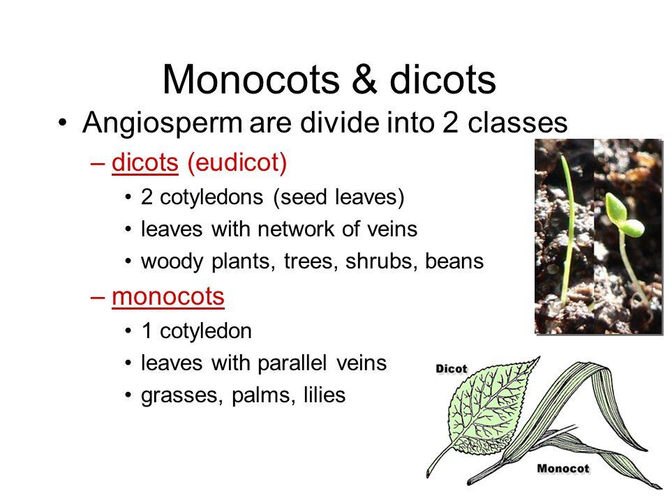 Comparison of Monocots & Dicots