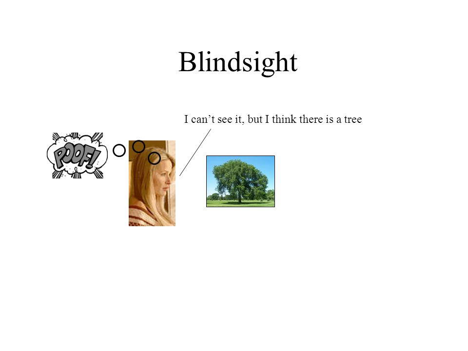 Blindsight I can't see it, but I think there is a tree