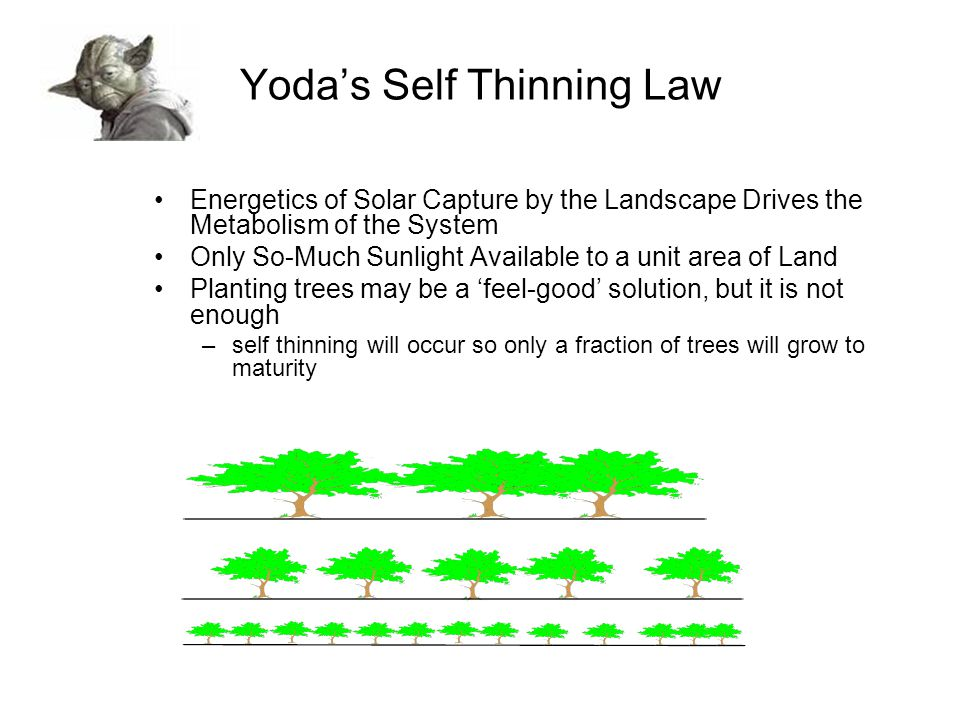 Yoda's Self Thinning Law Energetics of Solar Capture by the Landscape Drives the Metabolism of the System Only So-Much Sunlight Available to a unit area of Land Planting trees may be a 'feel-good' solution, but it is not enough –self thinning will occur so only a fraction of trees will grow to maturity