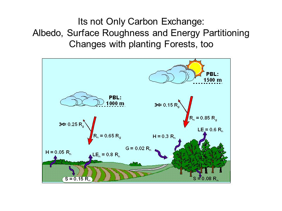 Its not Only Carbon Exchange: Albedo, Surface Roughness and Energy Partitioning Changes with planting Forests, too
